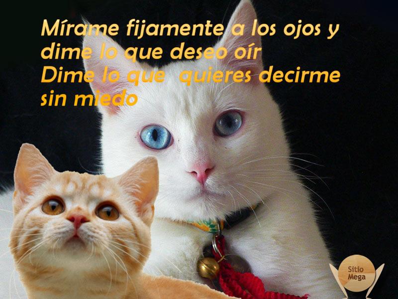 Imagen-gratis-para-descargar-y-compartir-de-gatos-expresivos