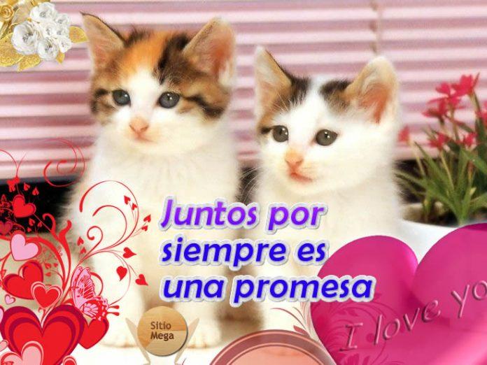 Imagen-gratis-para-descargar-y-compartir-de-gatos-juntos-por-siempre