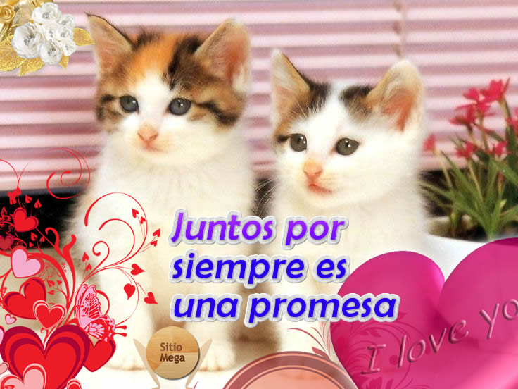 Imágenes De Gatos Con Frases De Amor Sitiomegacom