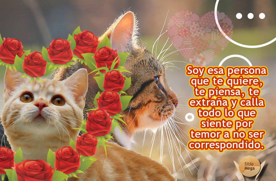 Imagen-gratis-para-descargar-y-compartir-de-gatos- gatos-obsesionados