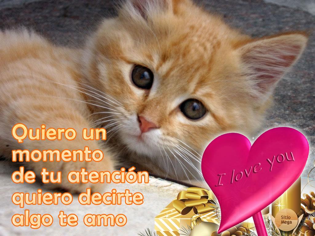 Imagen-gratis-para-descargar-y-compartir-de-gatos- gatos-te-amo